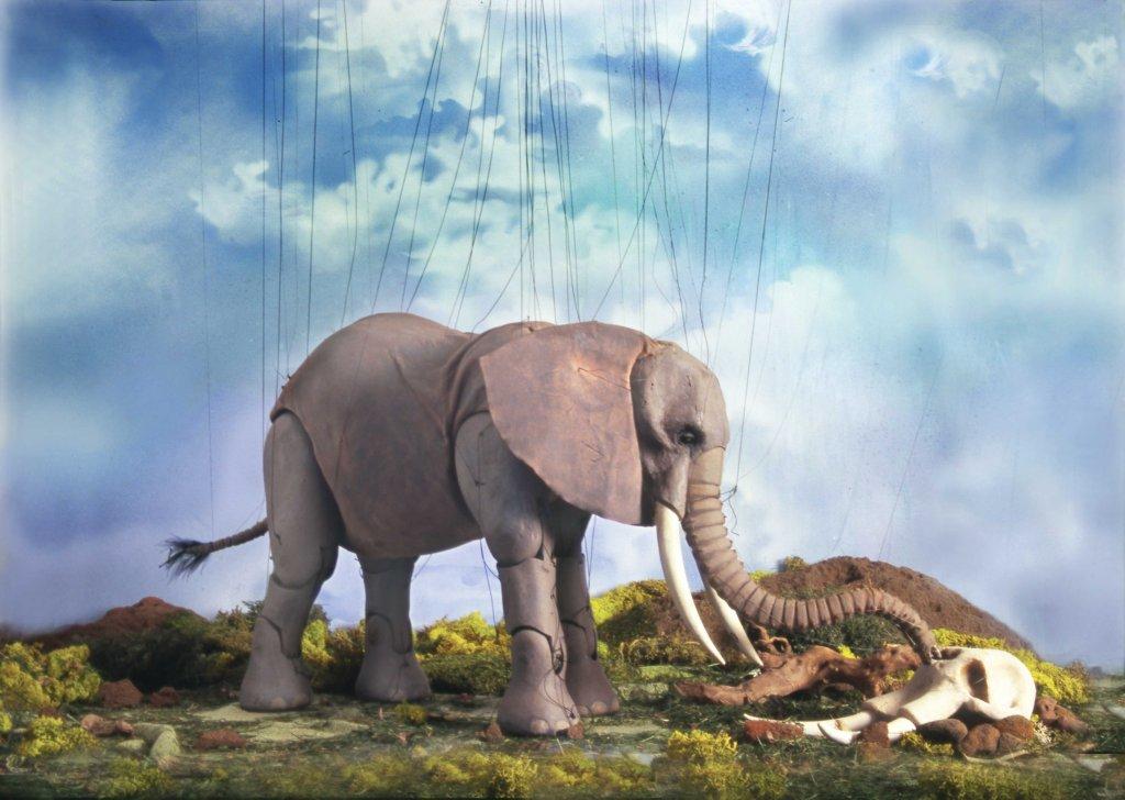 Cashore, mourning elephant